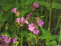 kwiat_867