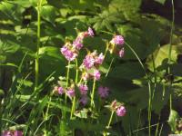 kwiat_868
