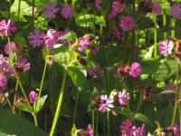 kwiat_869