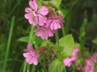 kwiat_870