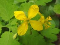 kwiat_871