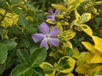 kwiat_873