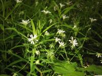 kwiat_876