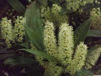 kwiat_878