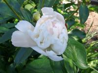 kwiat_882
