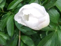 kwiat_883