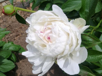 kwiat_884