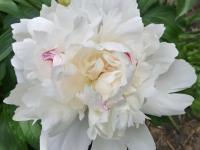 kwiat_885