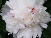 kwiat_886