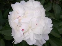 kwiat_888