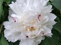 kwiat_890