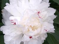 kwiat_891