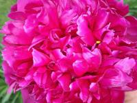 kwiat_892