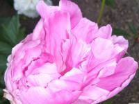 kwiat_893