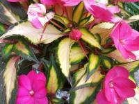 kwiat_894
