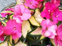 kwiat_895