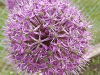 kwiat_900