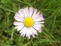 kwiat_903