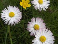 kwiat_904
