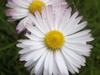kwiat_905