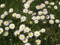 kwiat_906