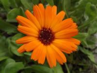 kwiat_908
