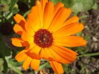 kwiat_909