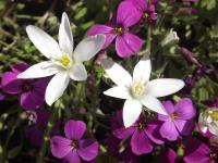 kwiat_912